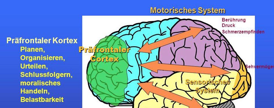Präfrontaler Kortex